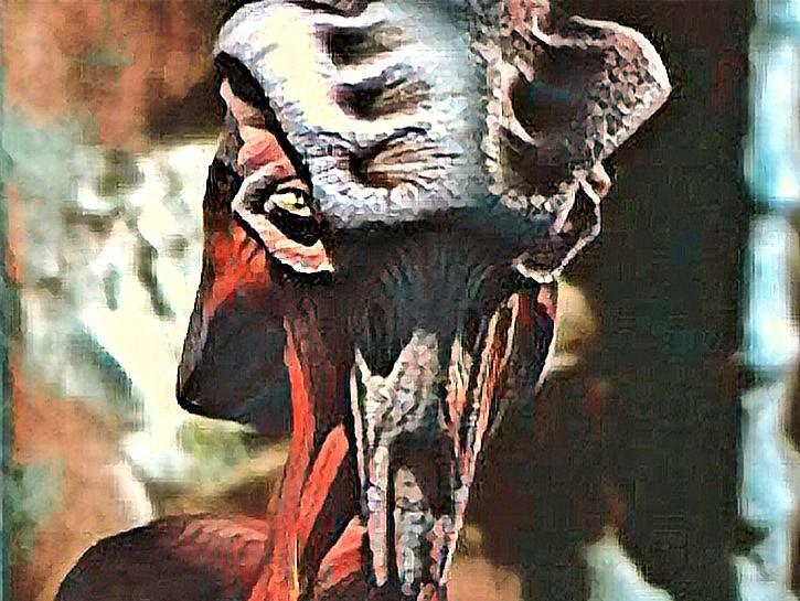 scorpion 11